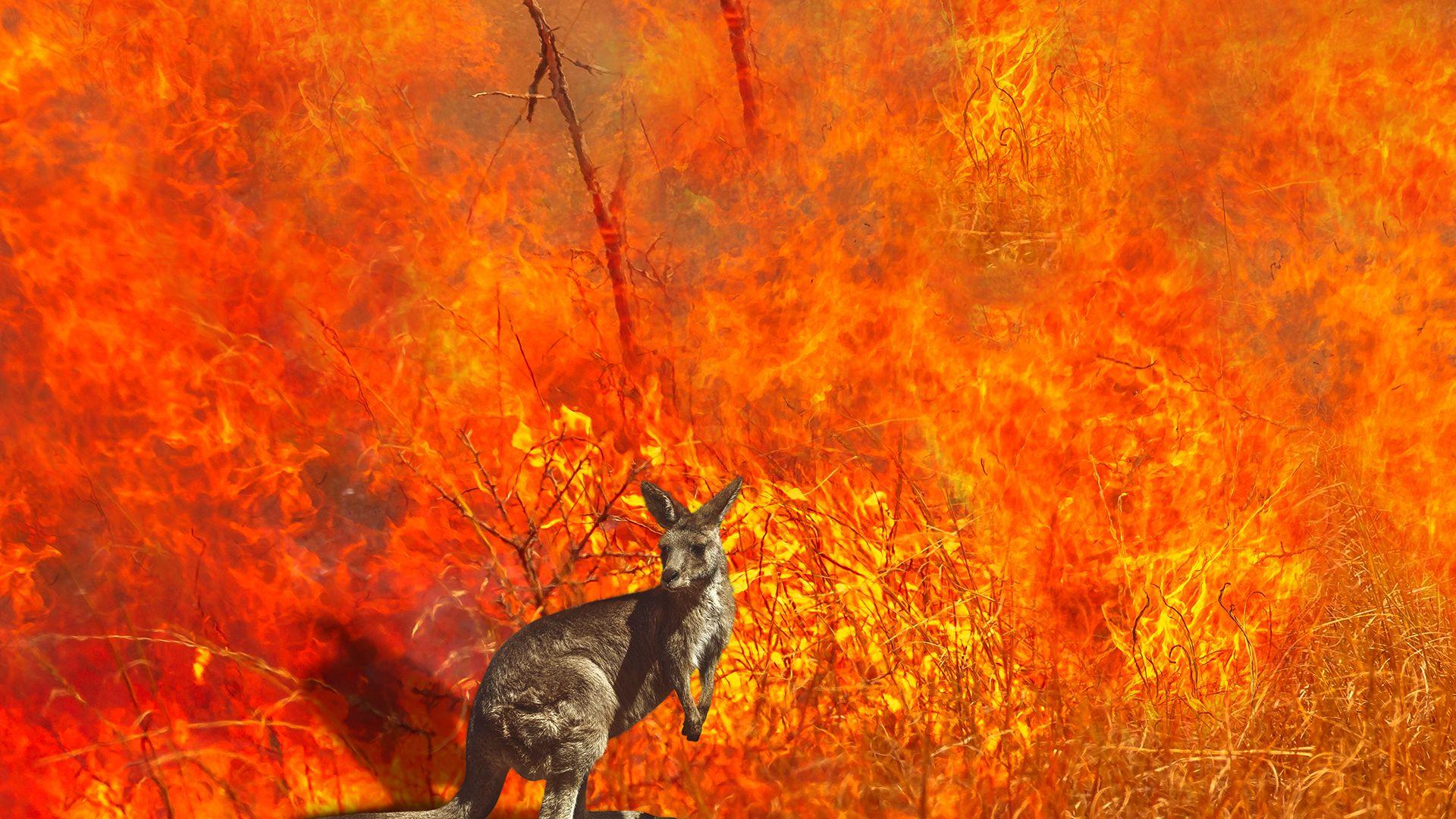 Kenguruk és koalák élettere szűnt meg az ausztrál tűz miatt