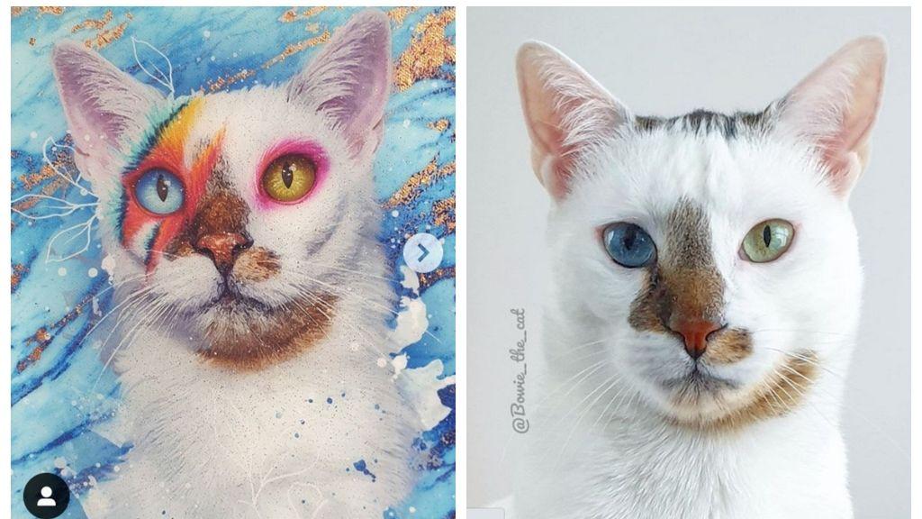 Ez a macska úgy néz ki, mint David Bowie