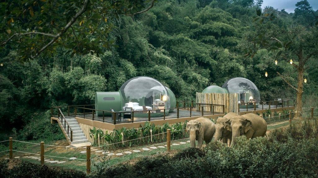 Ebből a buborékházból csodálhatod az elefántokat Fotó: Profimedia
