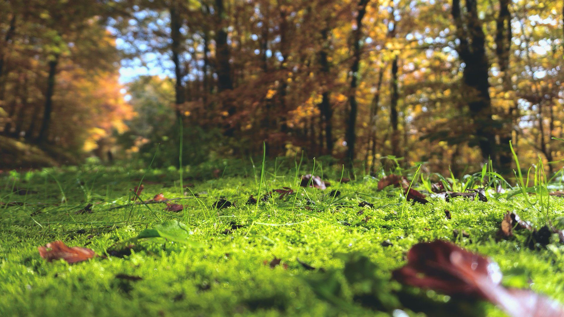 Erdő aljnövényzet moha