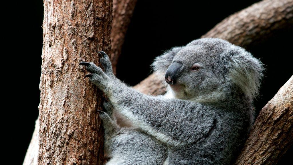 Három milliárd állat pusztult el az ausztrál erdőtűzben!