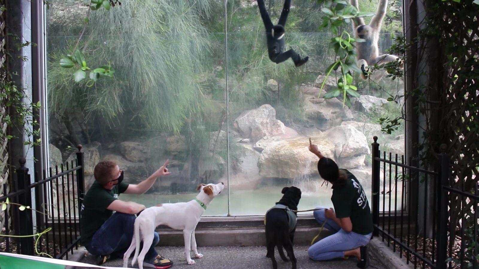 kutyák állatkert majom