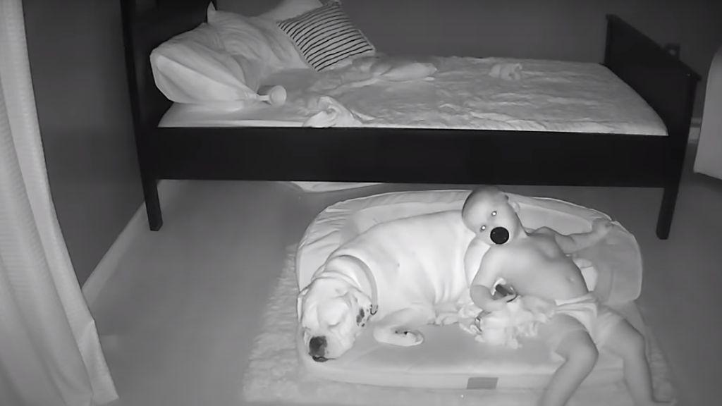 Minden éjjel a padlószőnyegre mászik a baba a boxerhez