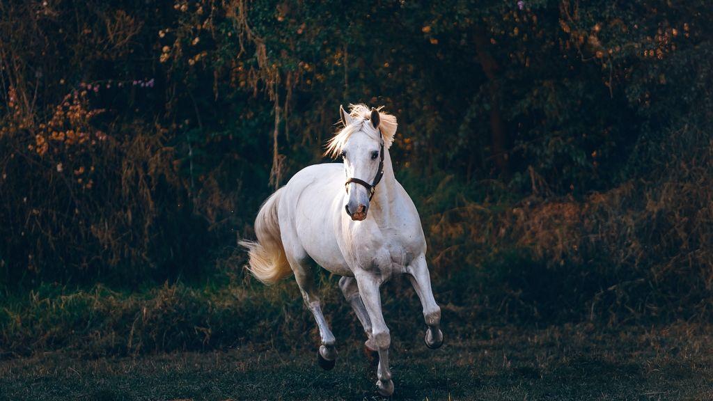 Ez a terápiás ló imádja a handpan játékot.