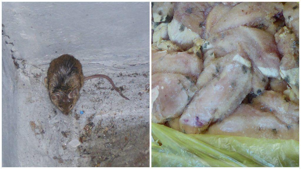 Egerek, penészes csirkehús egy szabolcsi raktárban