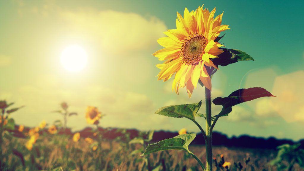 Vasárnapra visszatér az igazi nyári időjárás