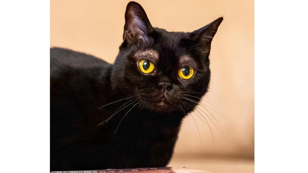 Olyan mintha emberi szemöldöke lenne ennek a macskának.