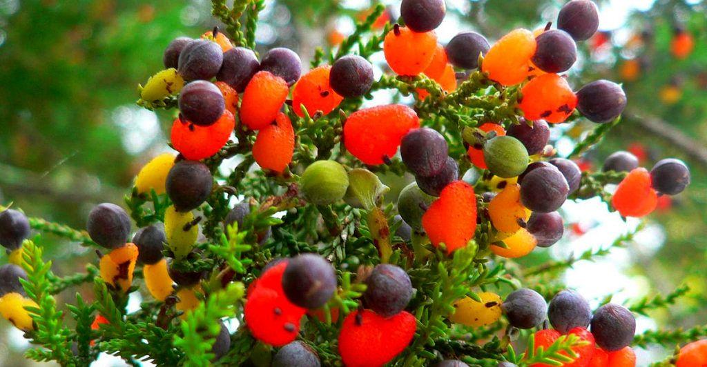 Többféle gyümölcs terem ugyanazon a fán