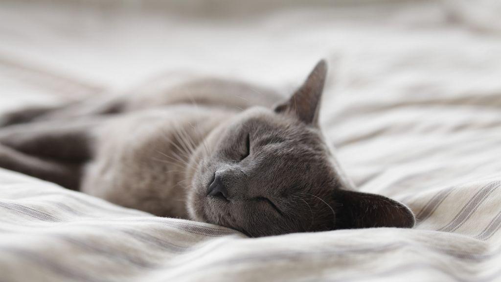 Elhízást okoz a kevés alvás.