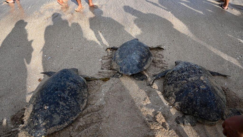 Teknősök Balin