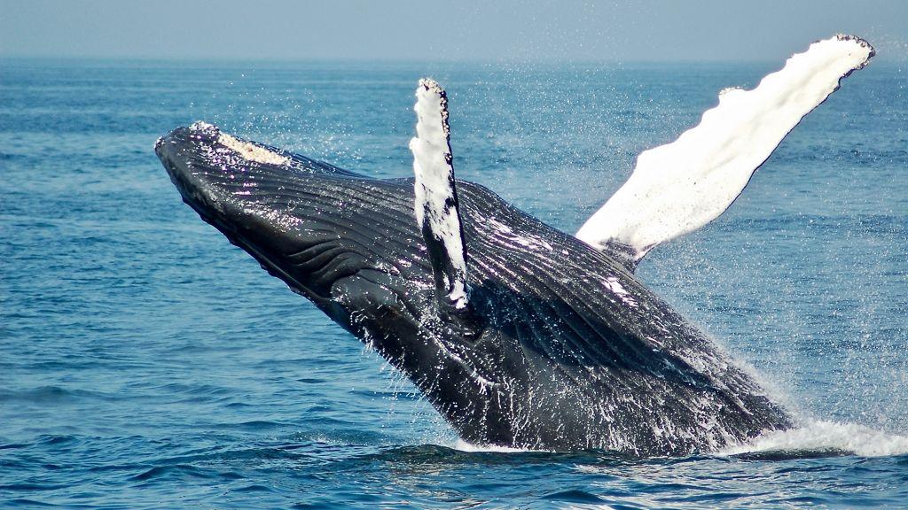 Összepréseltek a bálnák egy nőt