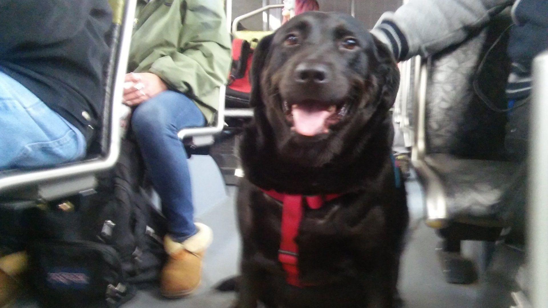 Egyedül buszozik Eclipse, a kutya