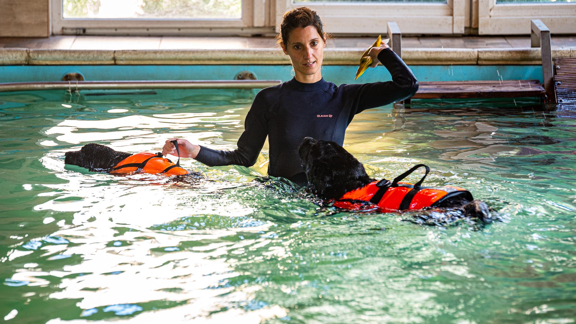 Úszással, masszázzsal és tornával segítenek a kutyák rehabilitációjában