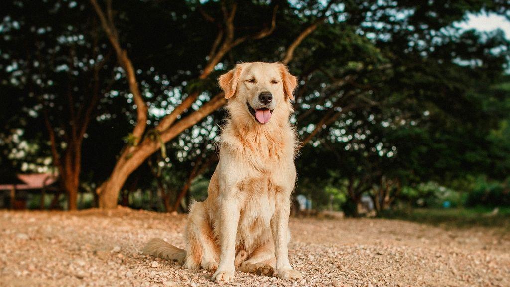 Terápiás kutya segíti a kaliforniai tűzoltókat