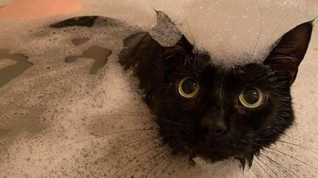 Imád a gazdájával fürdeni a vízimádó cica