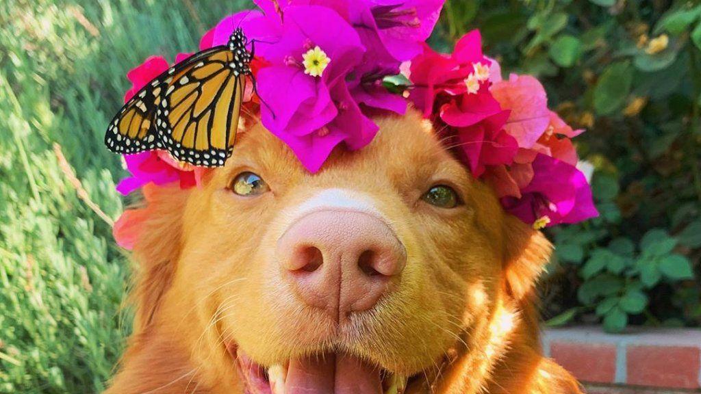 Ez az imádnivaló kutya a lepkék legnagyobb barátja