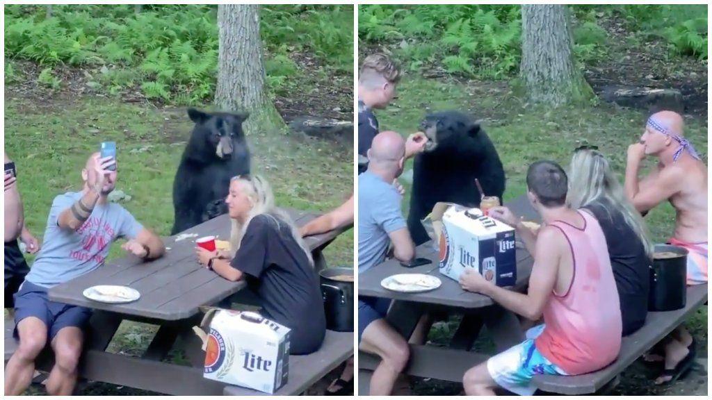 Kézből etették a medvét az idióta kirándulók