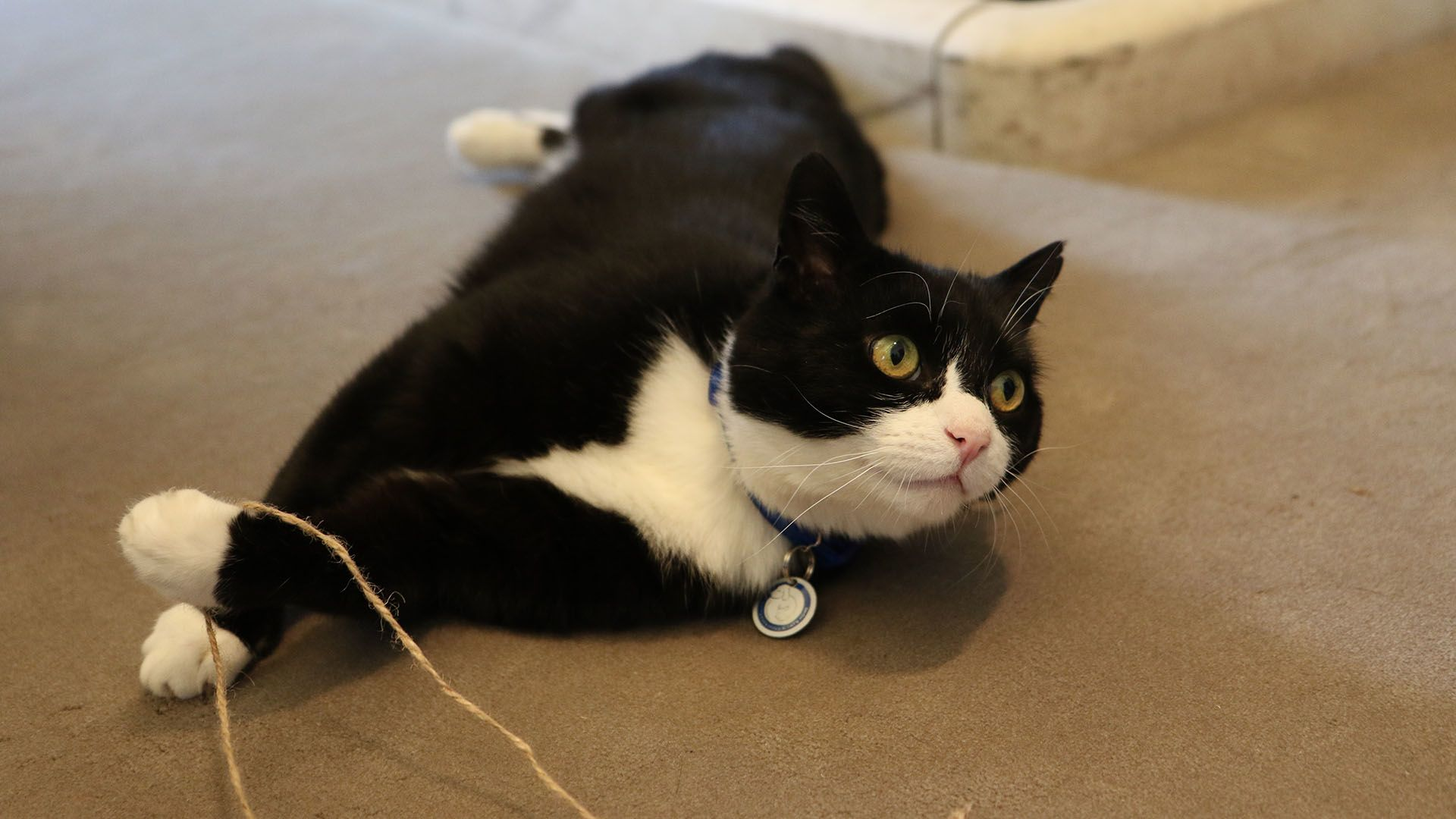 Nyugdíjba megy Palmerston, a brit külügyi cica