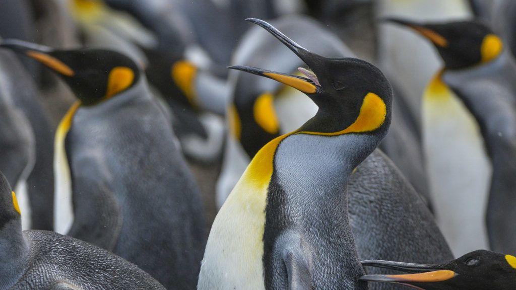 Sokkal több pingvin élhet a világon, mint eddig gondoltuk
