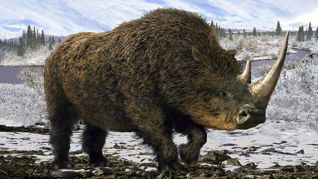 Az utolsó gyapjas orrszarvú lehetett a jégkorszaki kiskutya vacsorája