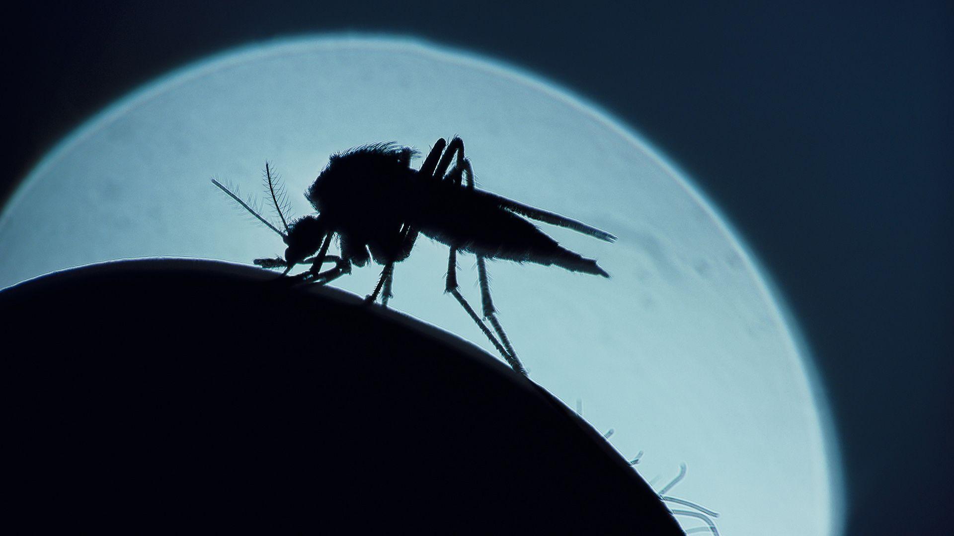 Szúnyogtornádót videóztak Oroszországban