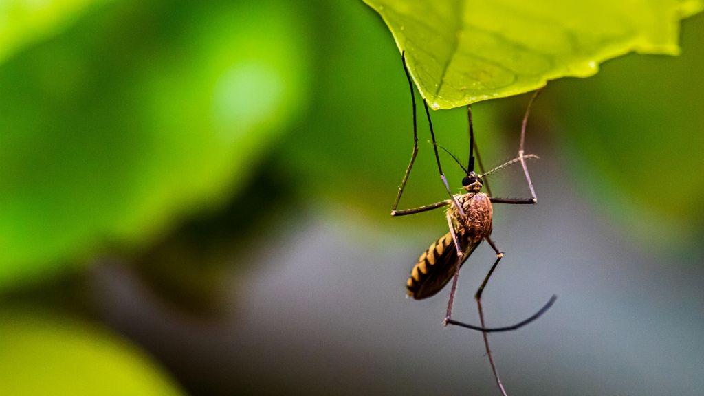 Szúnyoggyérítés lesz a Dunán
