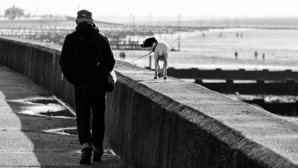 A kutyasétáltatás diszkrét bája (fotó: Pixabay)