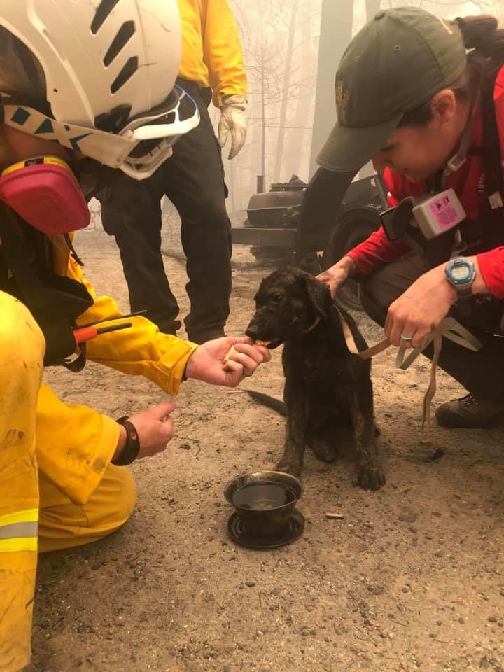 Inni kap a tűzvészt túlélő kiskutya (fotó: Butte megyei sheriffhivatal Facebook oldala)