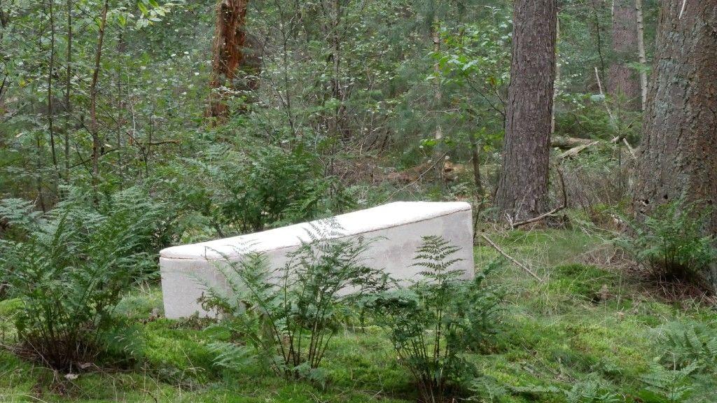 A gombakoporsó erdei környezetben (fotó: a Loop Facebook oldala)