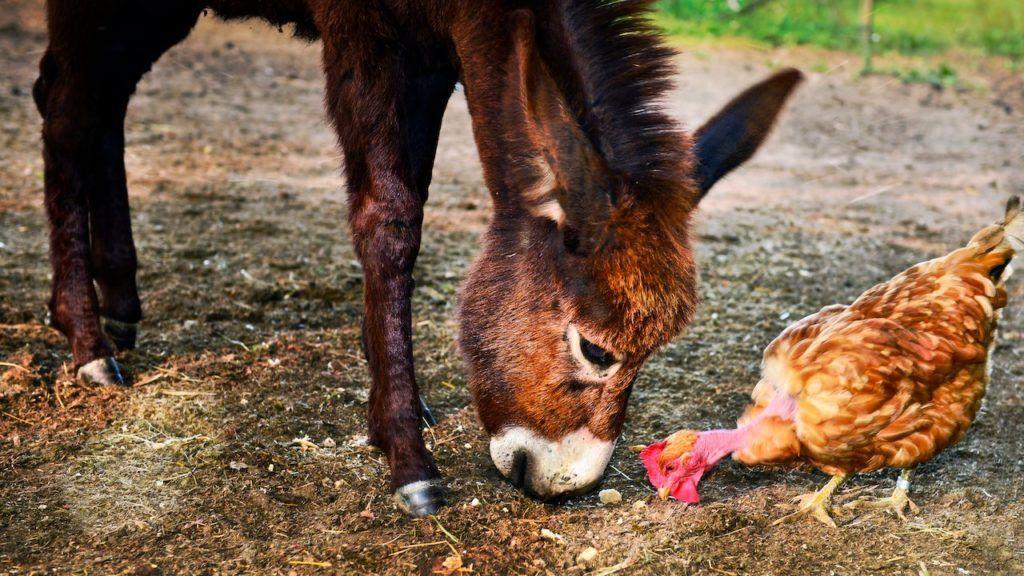 World's Oddest Animal Couples