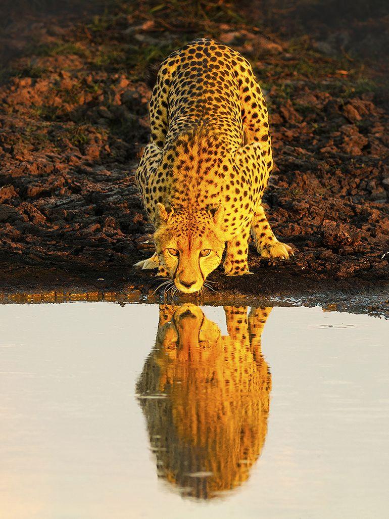 Fotó: Duncan Laker/Focus for Survival Wildlife Photography Competition