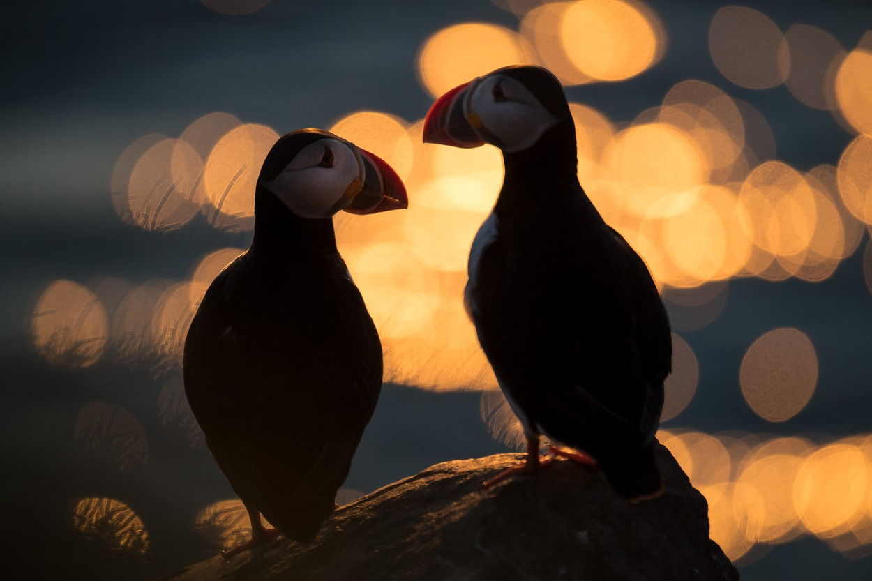 Fotó: Jason Parnell-Brookes/Focus for Survival Wildlife Photography Competition
