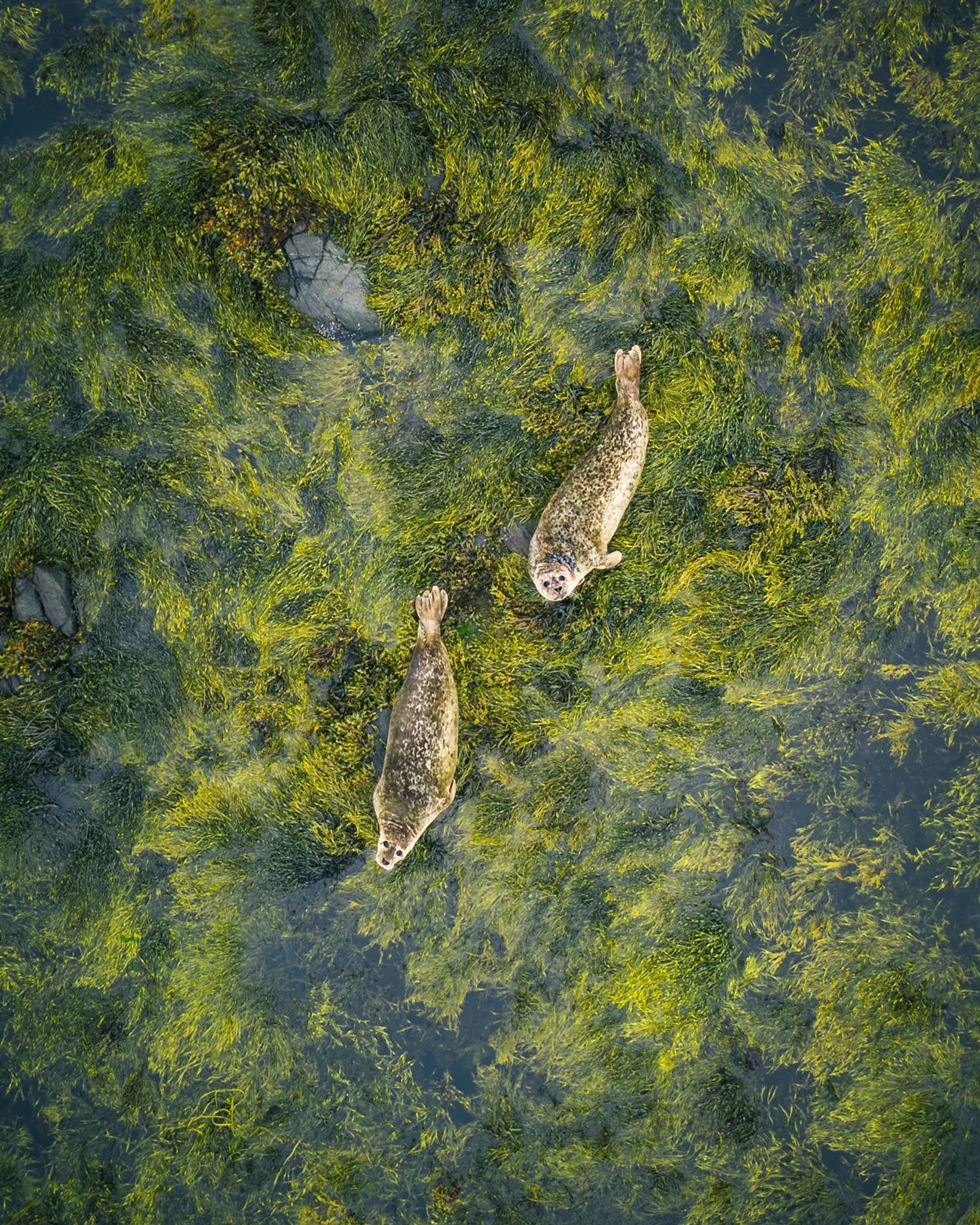 Fotó: Jon Cleave/Focus for Survival Wildlife Photography Competition