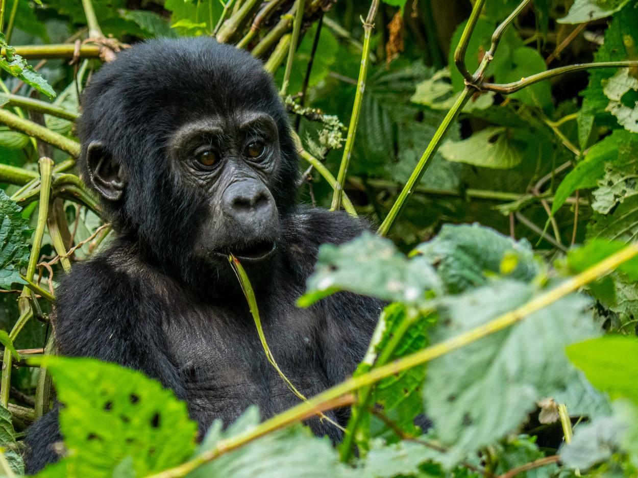 Fotó: Cyril Delapraz/Focus for Survival Wildlife Photography Competition