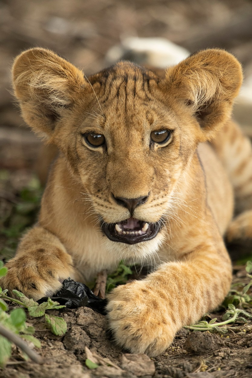 Fotó: Ben Penson/Focus for Survival Wildlife Photography Competition