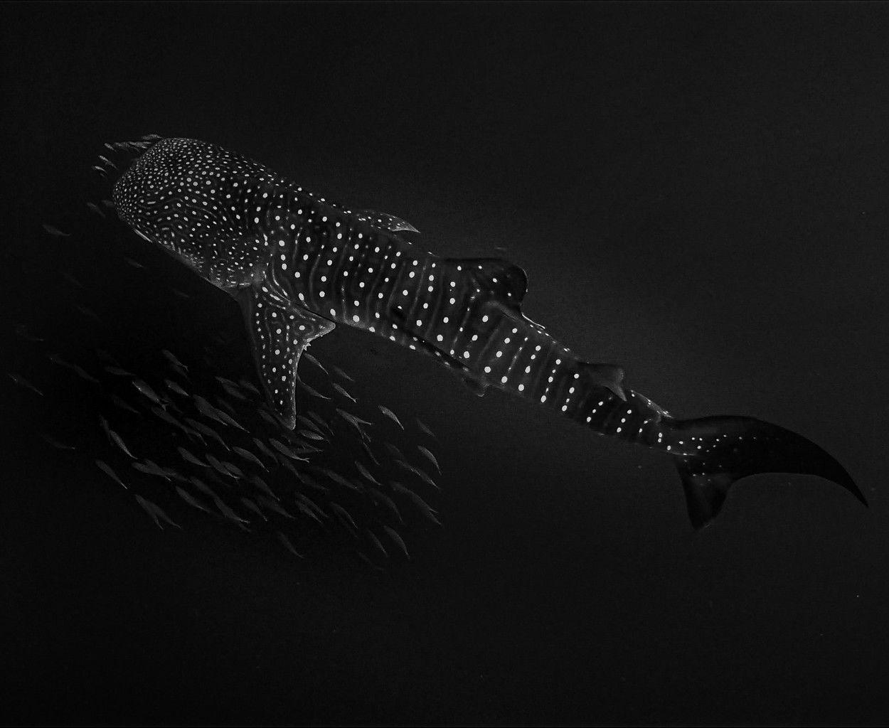Fotó: Simona Auteri/Focus for Survival Wildlife Photography Competition