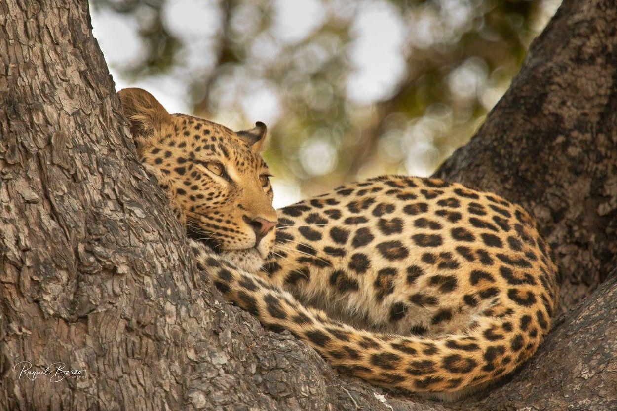 Fotó: Racquel Barao/Focus for Survival Wildlife Photography Competition