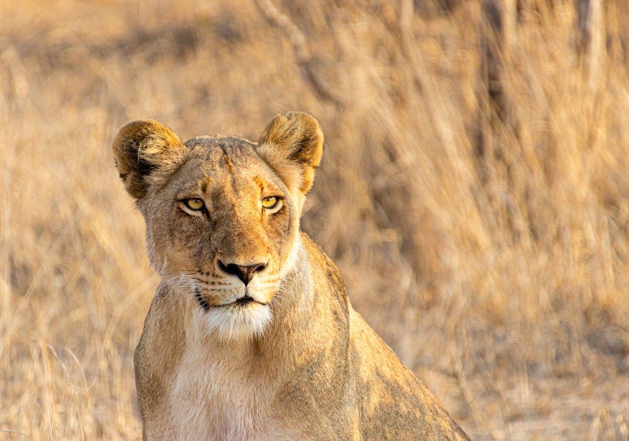 Fotó: Deb Farrimond/Focus for Survival Wildlife Photography Competition