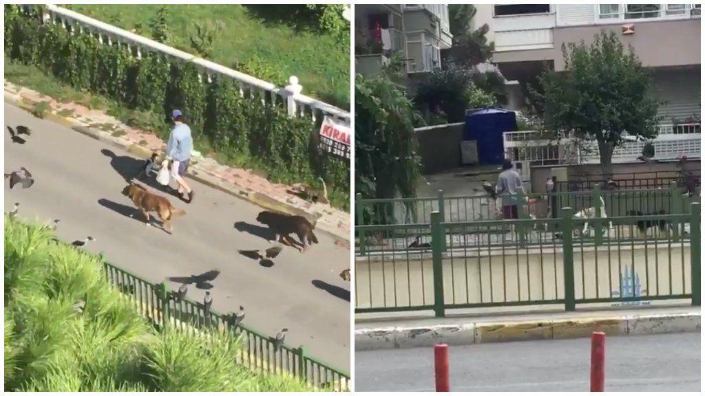 Állatok követnek egy nőt az utcán Isztambulban