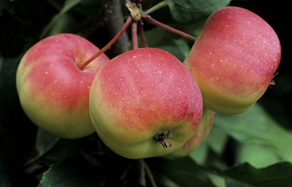 Bemutatjuk a tökéletes almás sütit