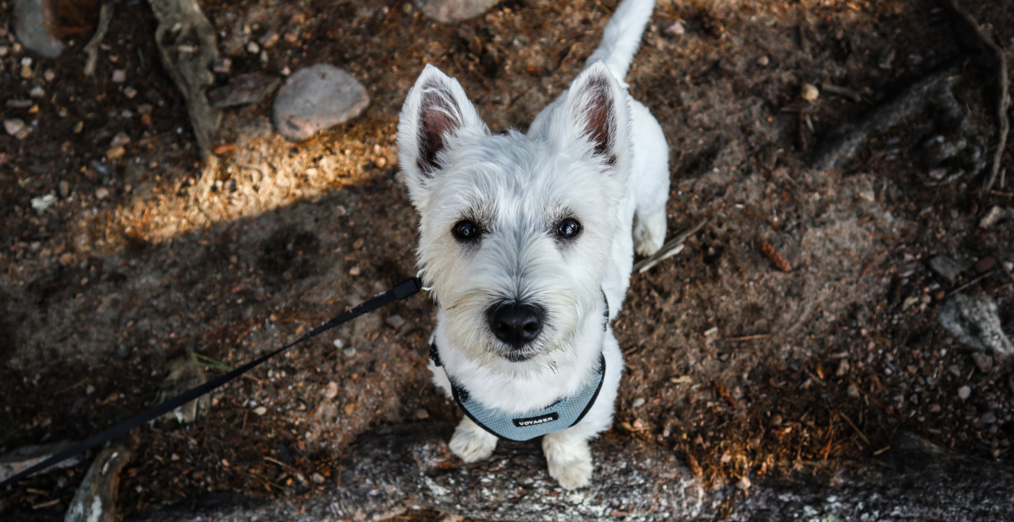 Másfél év után került haza az elveszettnek hitt kutya
