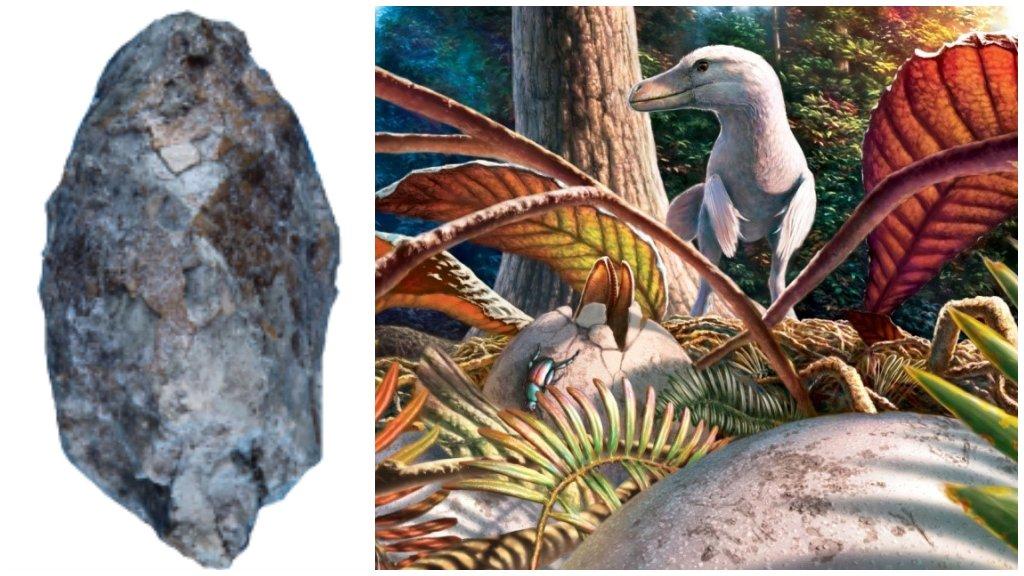 Első magyar dinótojás