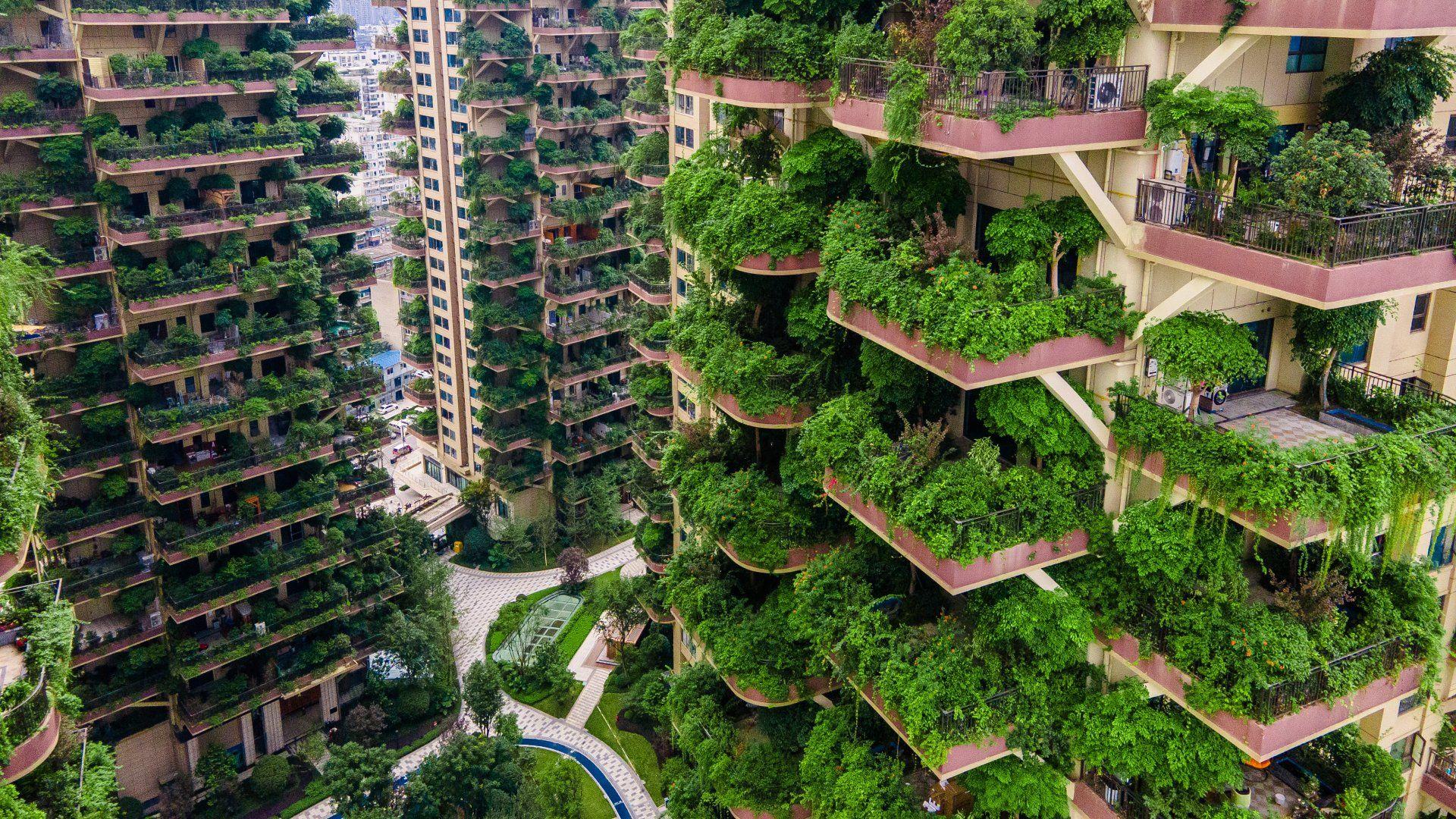 Függőleges kert Kínában