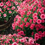 Roskadozik a virágokról