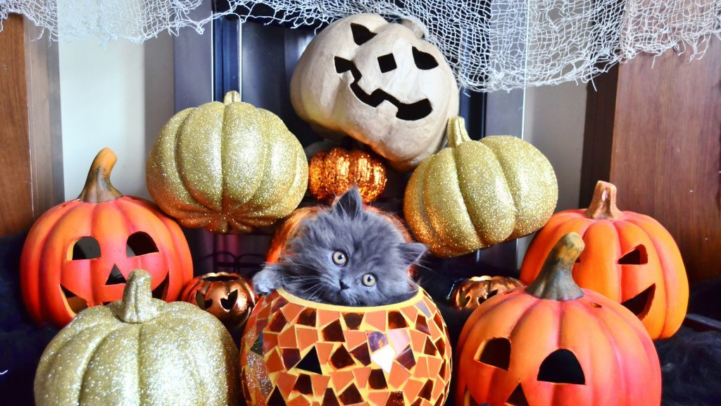 Készíts halloweeni tökdekort
