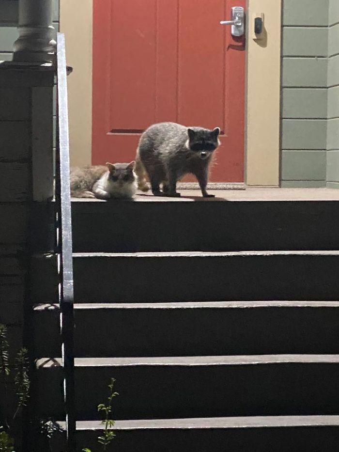 Macskaészlelések a legváratlanabb helyeken
