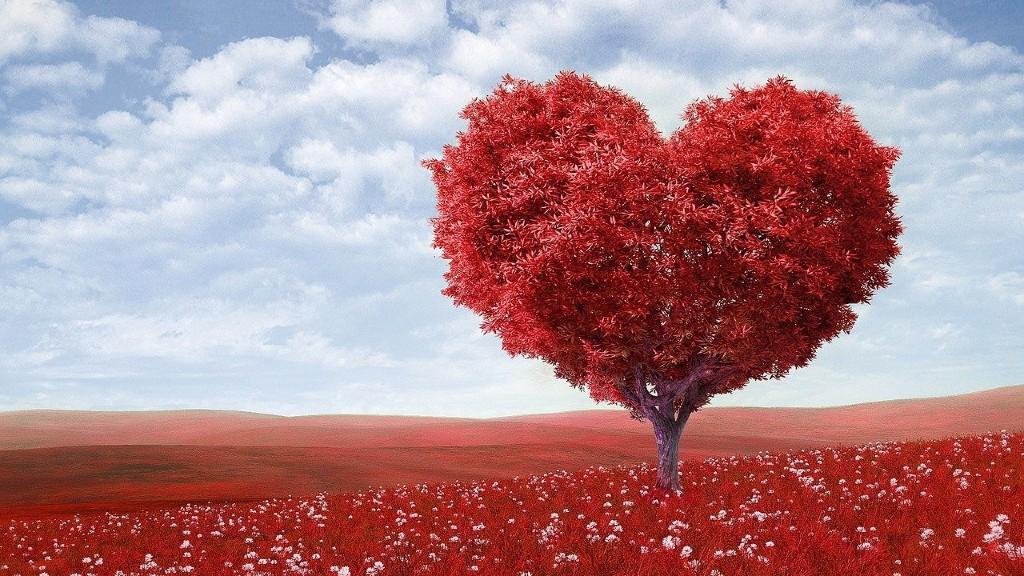 Egy szív alakú fa (fotó: Pixabay)