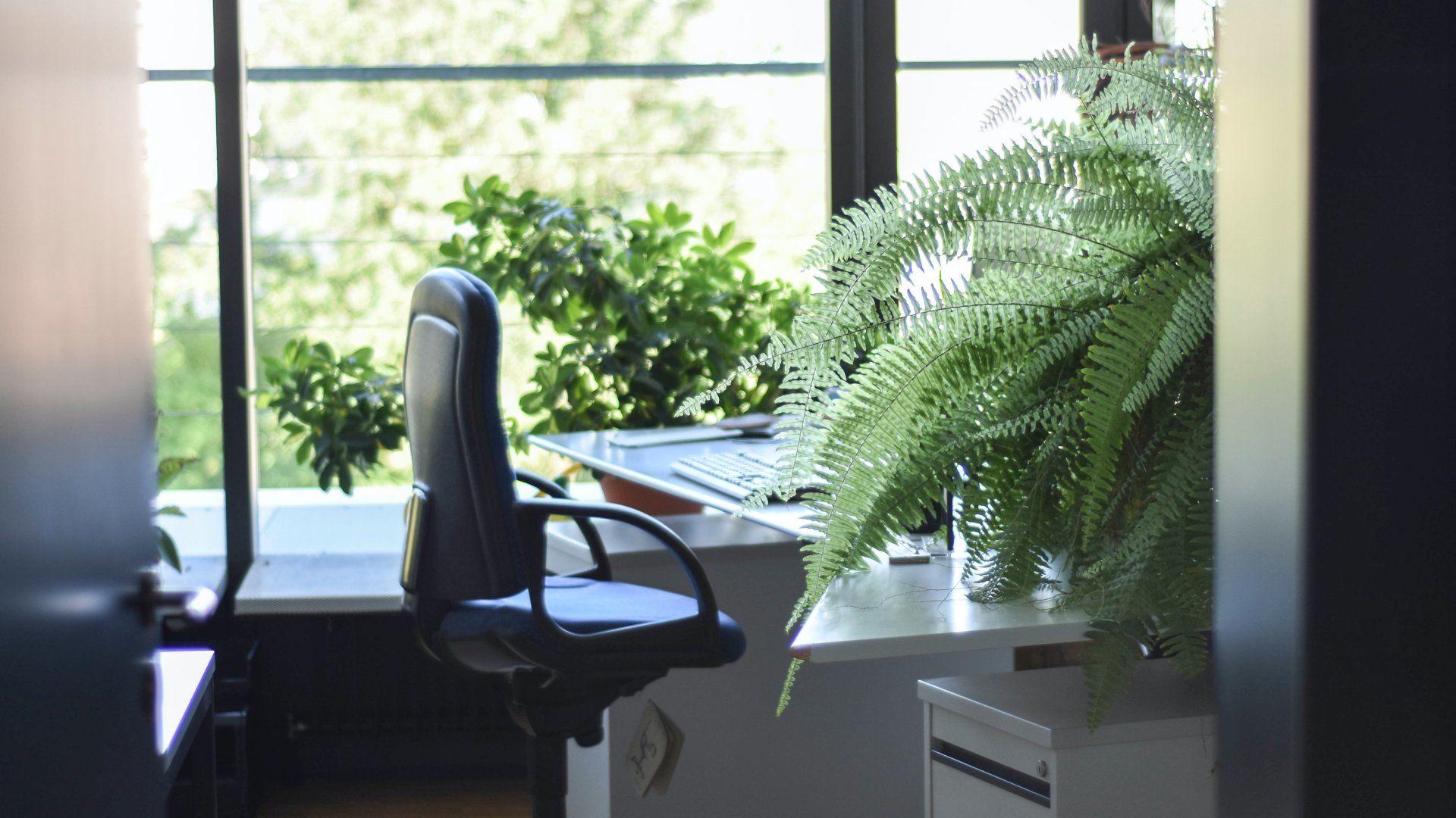 Növények az irodában
