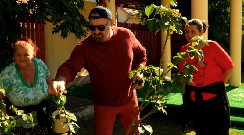 Növényi Norbert