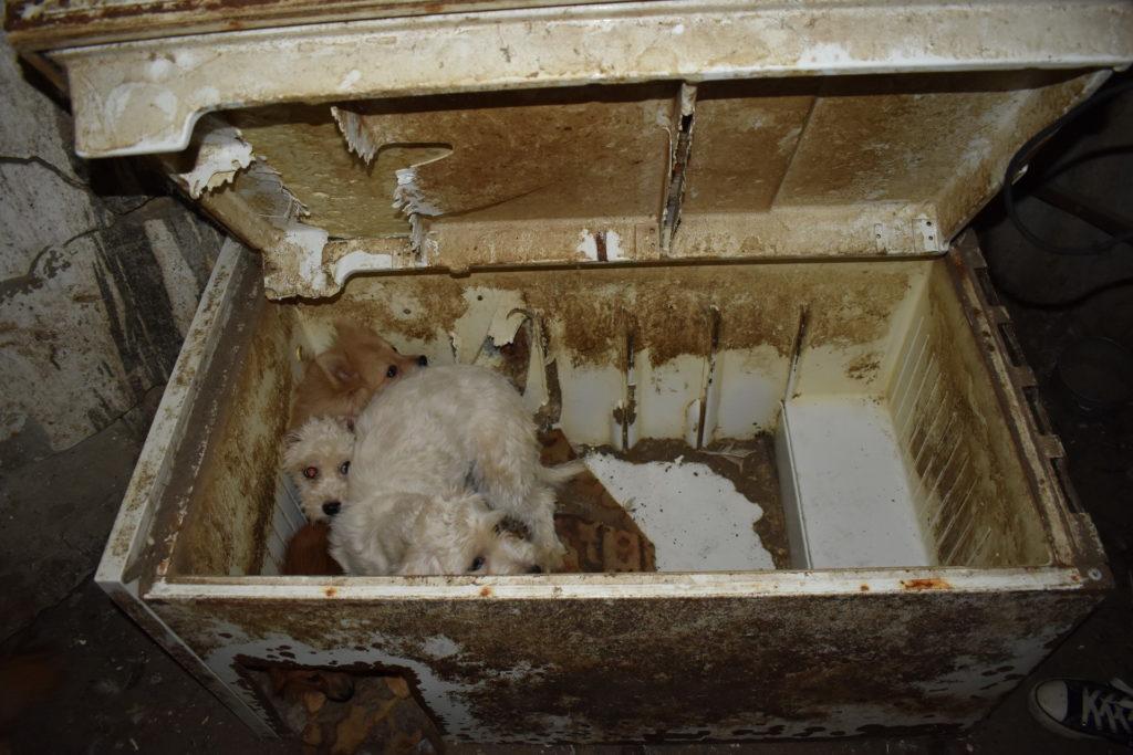 Állatkínzás: 148 kutyát vittek el egy karcagi szaporítótól, nagy részüknek hangja sem volt